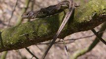 Jaszczurki Wielkopolskiego Parku Narodowego