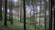 sylwaturystyka i ekoturystyka