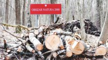 usuwanie drzew i obszar Natura 2000