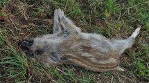 usuwanie zwłok padłych zwierząt