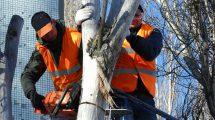 ochrona drzew w miastach