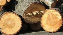 wycinka przydrożnych drzew