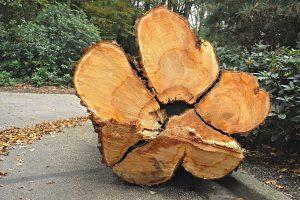zmiany w ochronie przyrody - usuwanie drzew