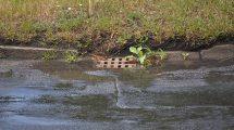 systemy odwadniania - wody opadowe
