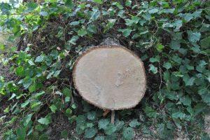 usuwanie drzew - zmiany przepisów