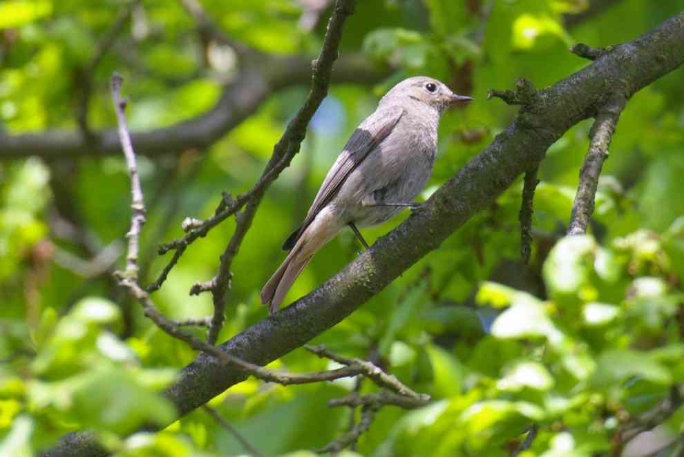 ekoturystyka i ochrona ptaków