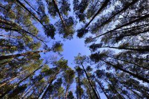 Zrównoważone gospodarowanie zasobami środowiska