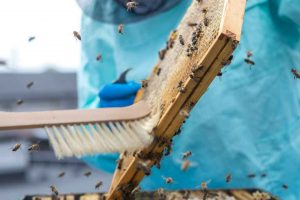 Promocja hodowli pszczół i województwa