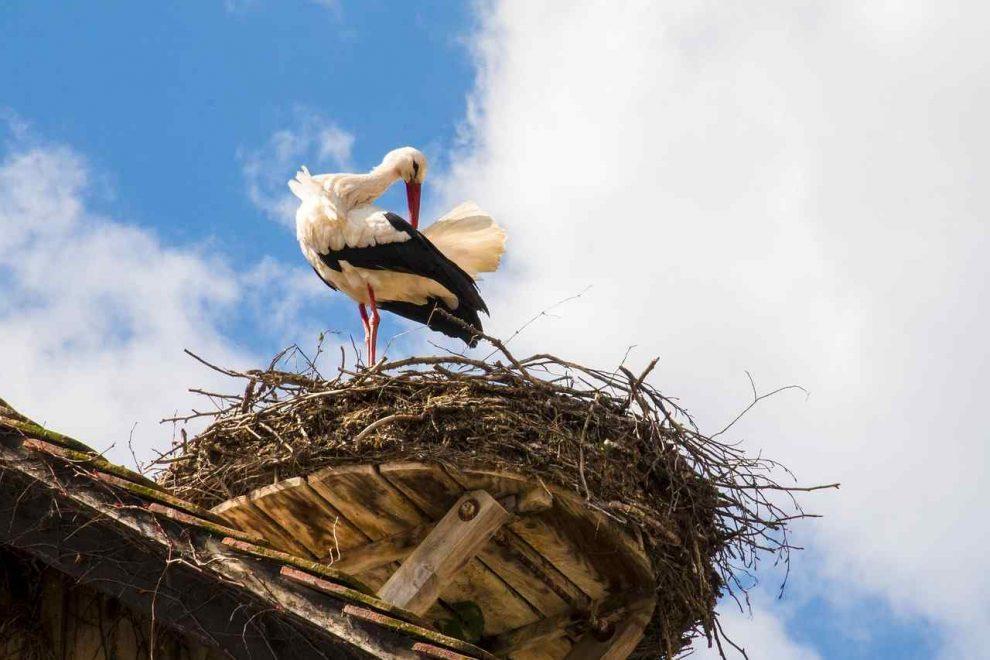 Gospodarstwo ekoturystyczne i ochrona ptaków