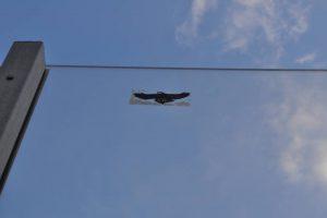 Ochrona ptaków i ekrany akustyczne