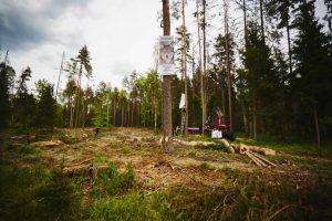 wstrzymać wycinkę w Puszczy Białowieskiej