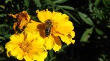 W Polsce brakuje kompleksowej i jednolitej strategii wspierania pszczelarstwa, która określałaby przyszłość branży