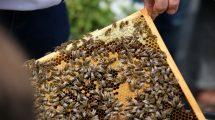 przyjazny dom dla pszczół