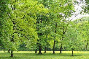 zrewitalizują parki i zieleńce