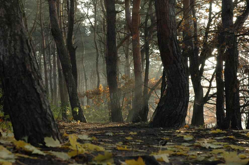 ochrona przyrody Lasy Warszawy