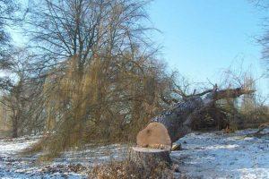 Ochrona drzew i krzewów na terenach zabytkowych