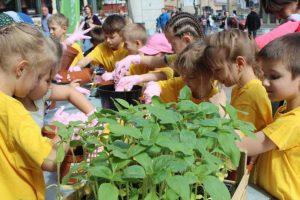 Proekologiczne ogrody słonecznikowe
