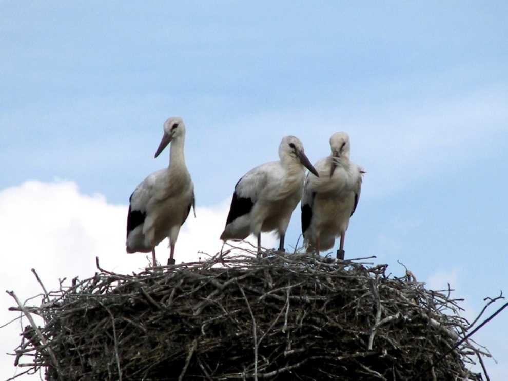 Ochrona bocianów