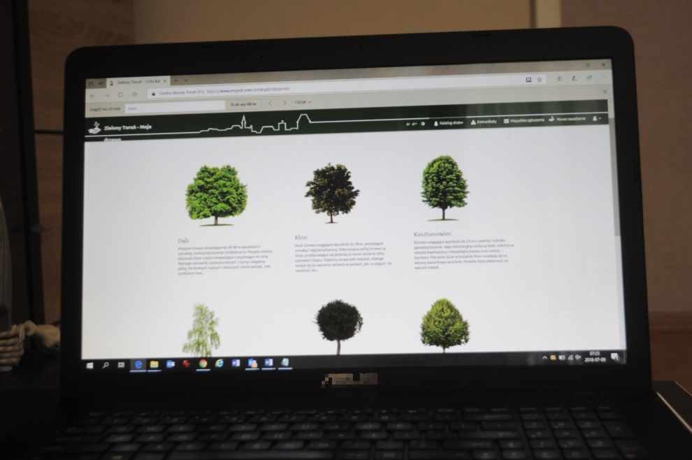 posadzić drzewa