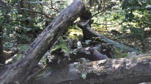 Szlak w rezerwacie przyrody zamknięty