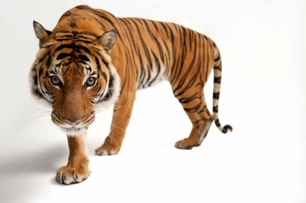 wystawa zdjęć zagrożonych gatunków