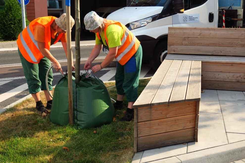 Nawadnianie drzew za pomocą worków