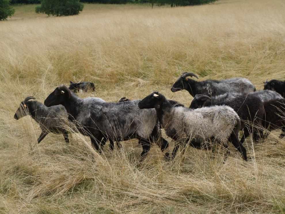Ochrona cennych łąk