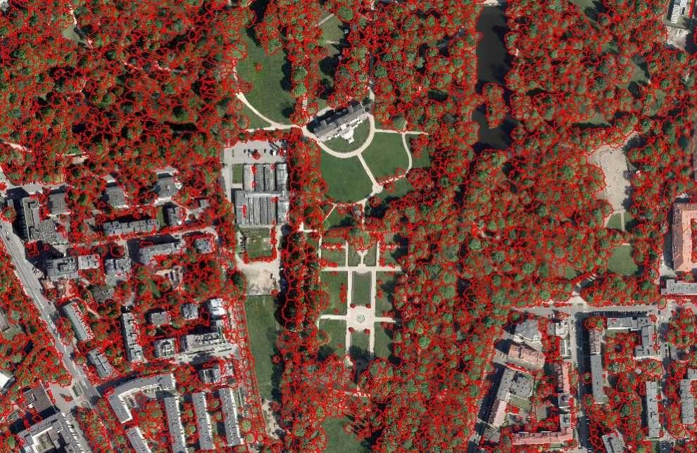 mapa koron drzew