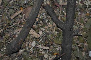 biomasowe OZE