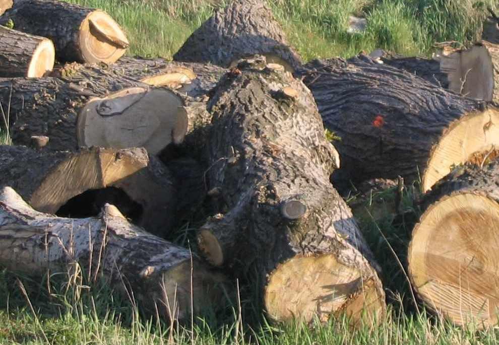 ochrona drzew i krzewów