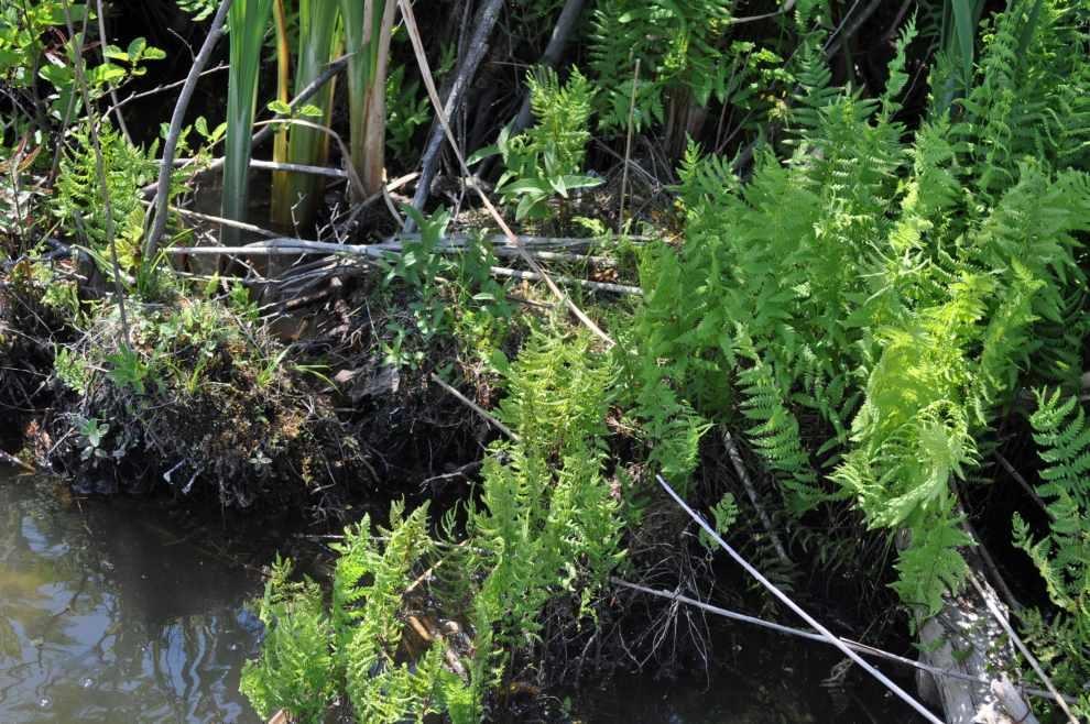 Ochrona przyrody w glosariuszu