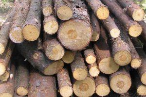 Kogeneracja na biomasę