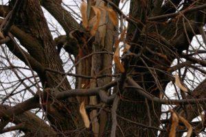 Zabiegi w obrębie korony drzewa
