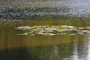 Działania z ekologii i ochrony przyrody