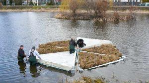 Platformy dla ptaków i czystszej wody