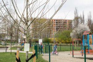 nasadzenia drzew w Katowicach