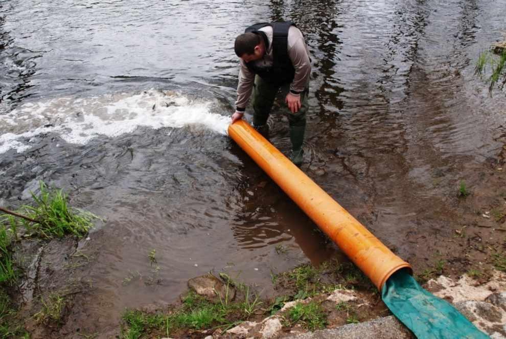 pstrągów potokowych