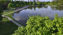 początek prac nad warszawską Polityką ochrony drzew, w której będą spisane standardy opieki nad zielenią miejską.