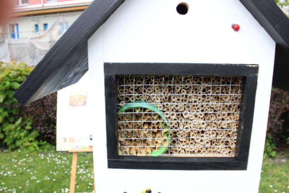 Elbląg pomaga pszczołom