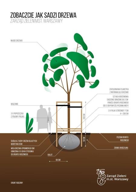 jak sadzić drzewa