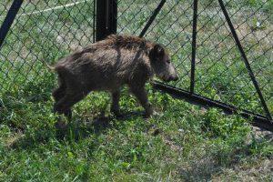Leczenie i rehabilitacja dziko żyjących zwierząt