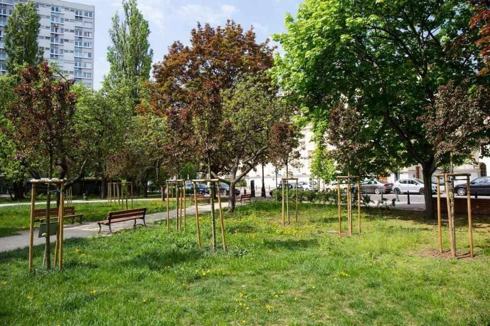 miejsca na kolejne drzewa