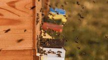 Monitoring pszczelich uli