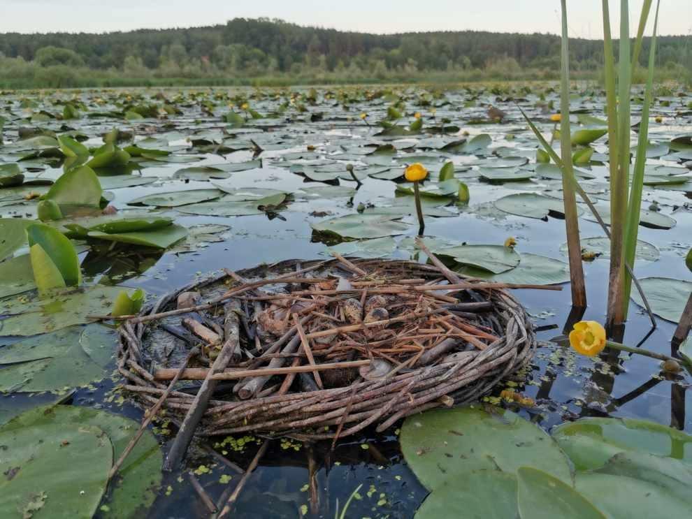 Na rzecz ochrony przyrody