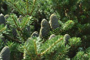zagrożonym roślinom tropikalnym