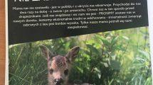 Pomagać młodym zwierzętom