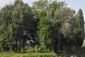 rozwój terenów zieleni w Żyrardowie