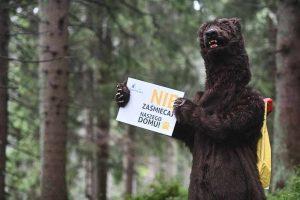 Spotkanie z niedźwiedziem