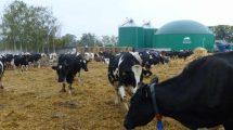 Biogazowania w Przybrodzie