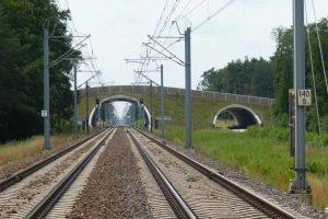 Ochrona zwierząt przy modernizacji linii kolejowej